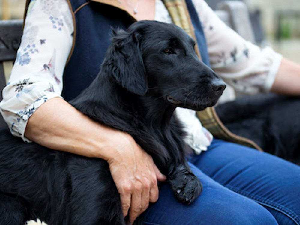 Person sitting with their arm resting on a dog