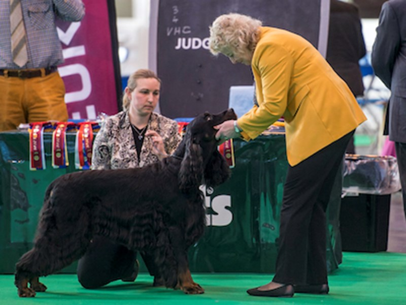 Dog being judged at Crufts