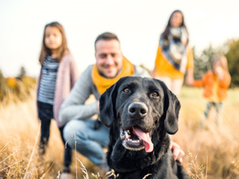 Labrador with family looking happy smiling at him
