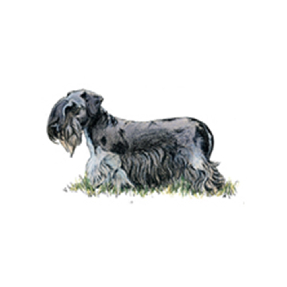 Cesky Terrier illustration