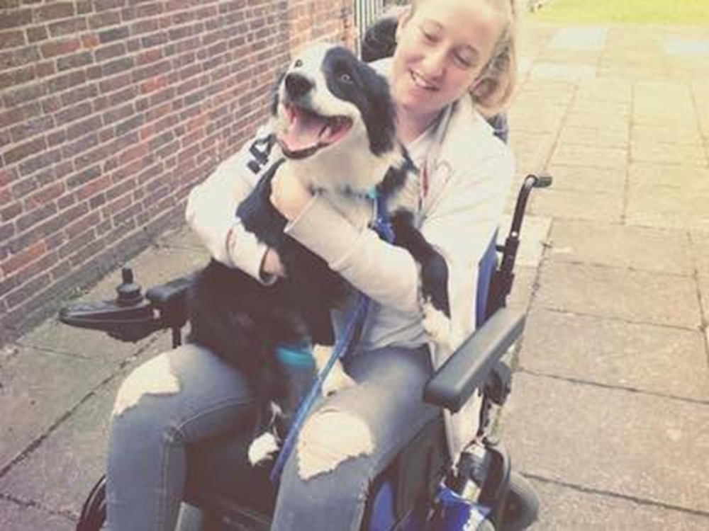 Dog on lap of owner in wheelchair