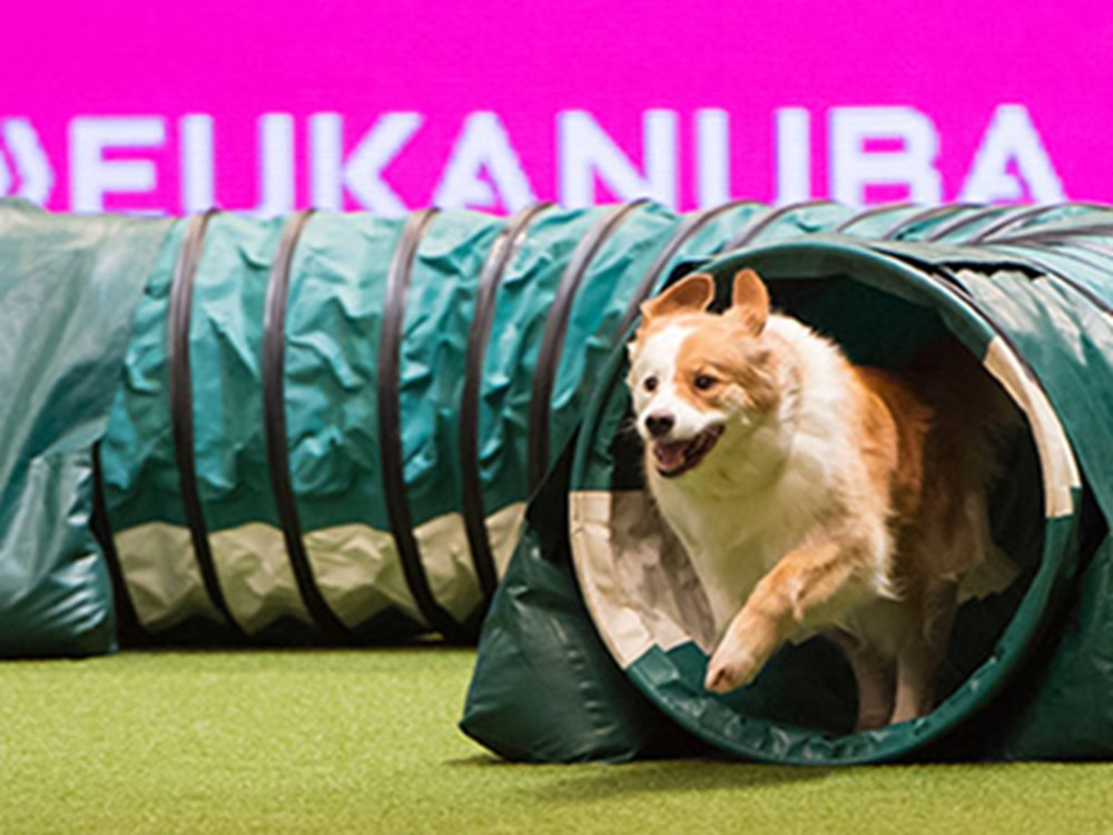 Dog running through tunnel