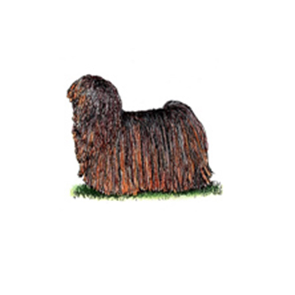 Hungarian Puli illustration