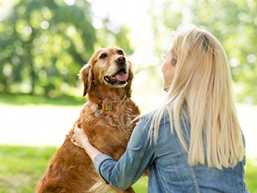 Retriever with tongue out looking at blonde owner
