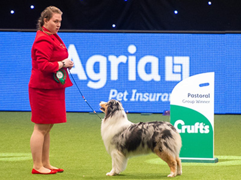 A woman in a red jacket showing her dog at Crufts