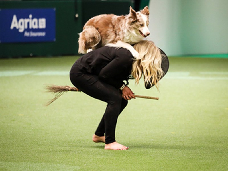 Lady bent over while dog jumps on back
