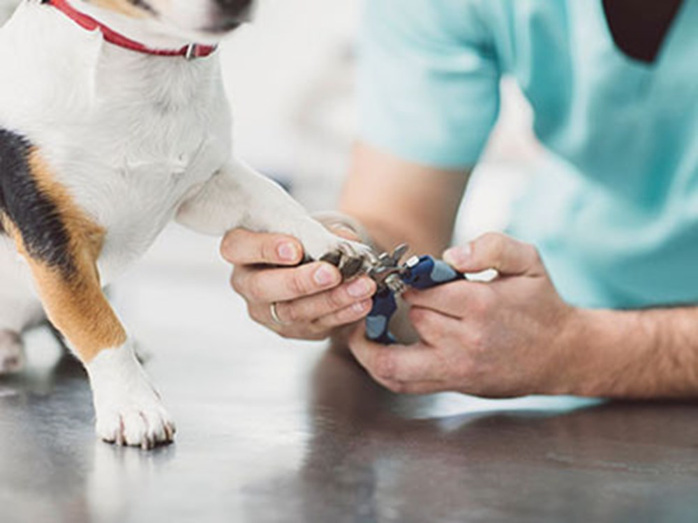 Dogs nails being cut