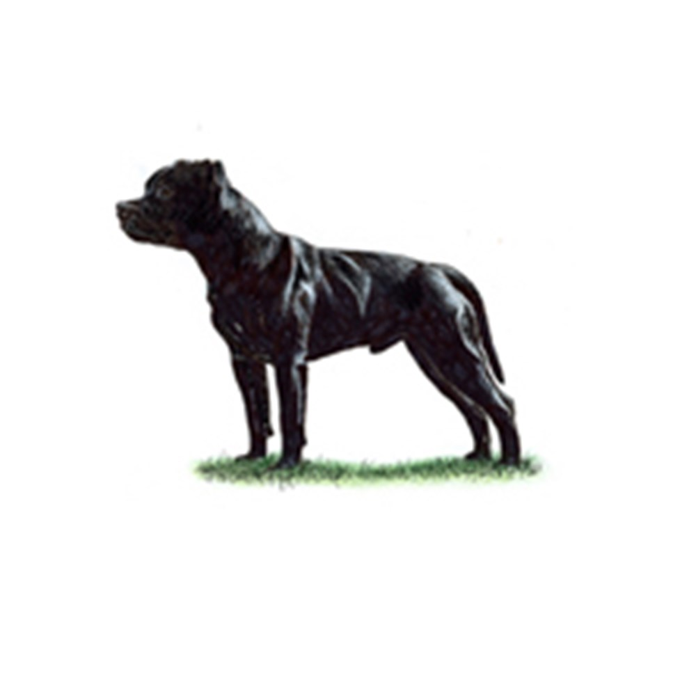 Staffordshire Bull Terrier illustration