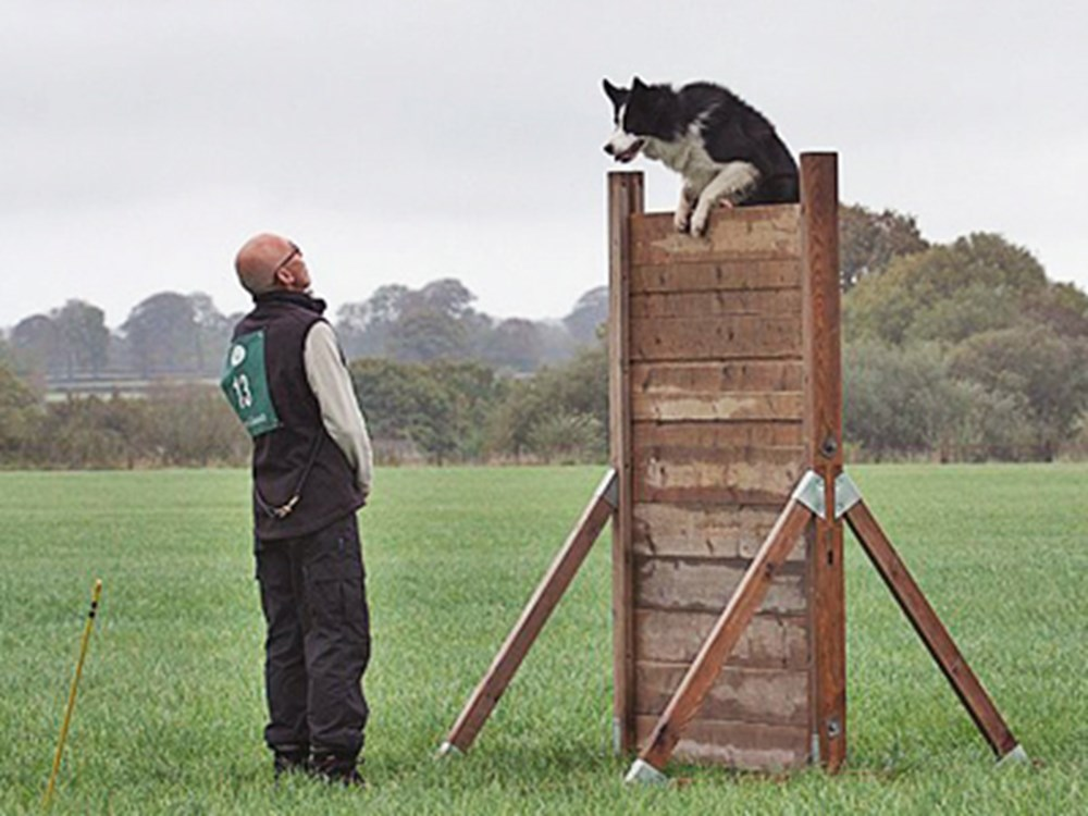 Dog climbing over a frame with owner looking at dog