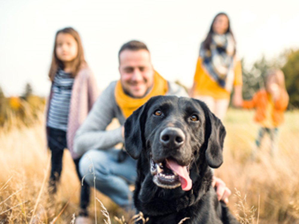 Labrador looking happy with family smiling at him