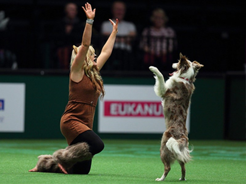 Lady kneeling on the floor with hands in the air and dog standing on two feet