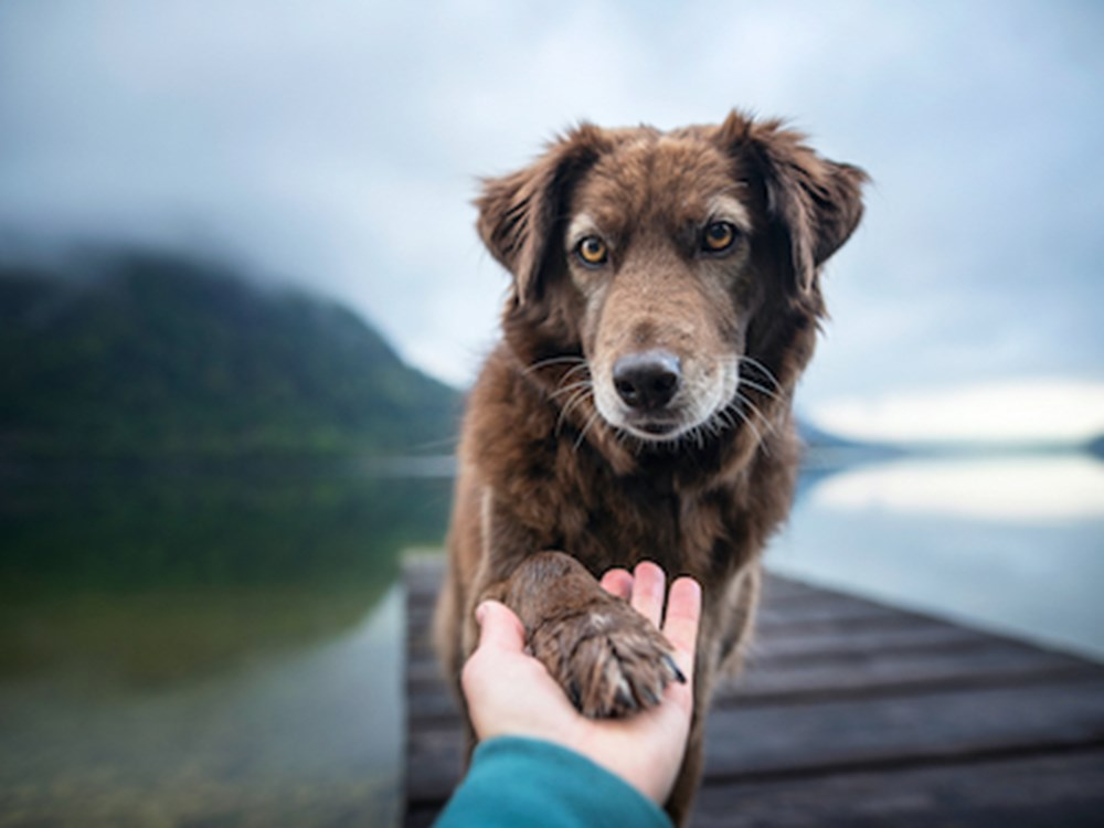Dog's paw being held by photographer