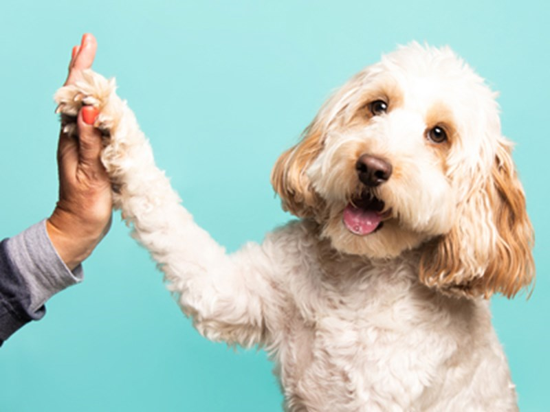 Dog giving a high five