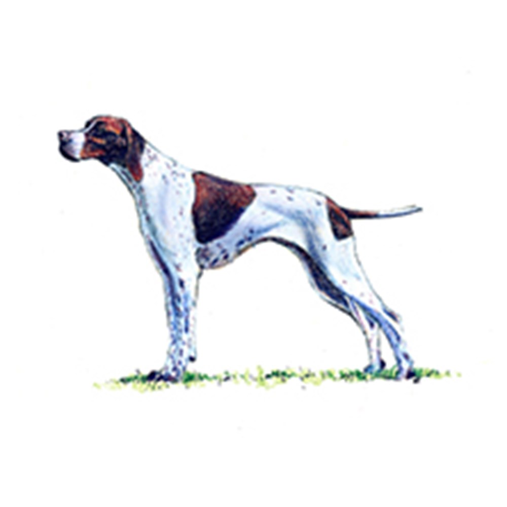 Pointer illustration