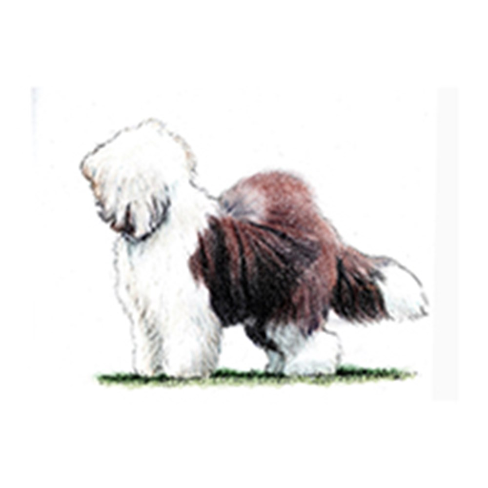 Old English Sheepdog illustration