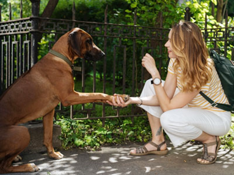 Dog giving his paw to a lady who is kneeling down
