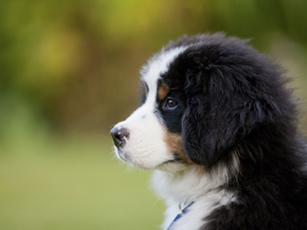 Puppy looking left