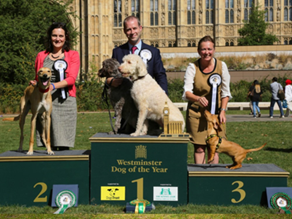 Winners of Westminster dog of the year