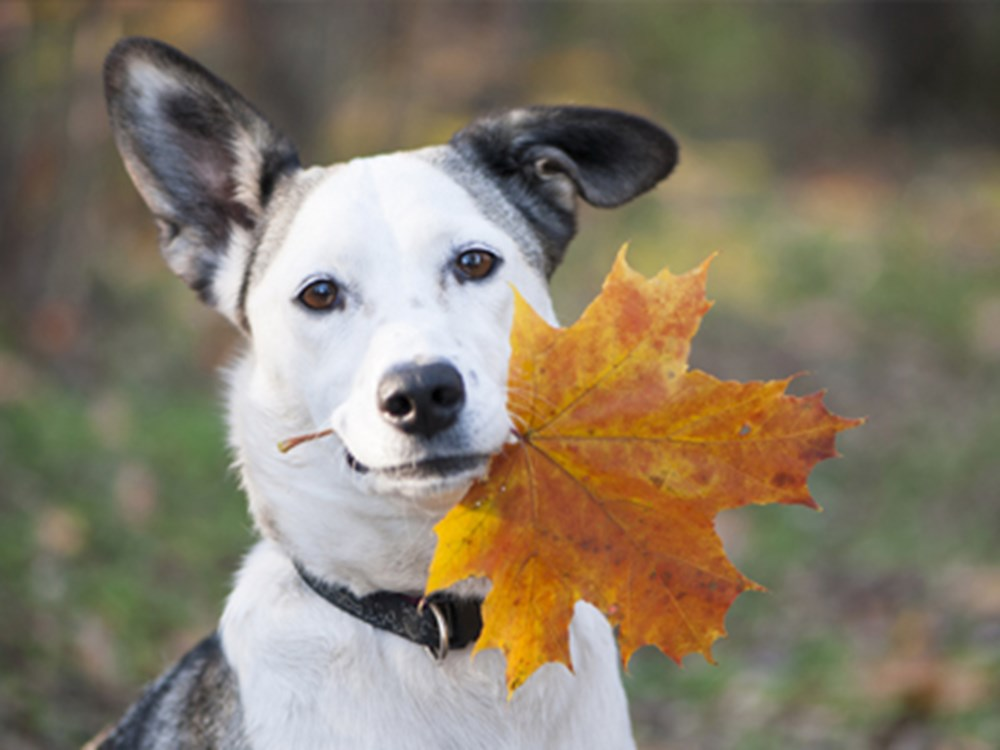 Dog with leaf in mouth