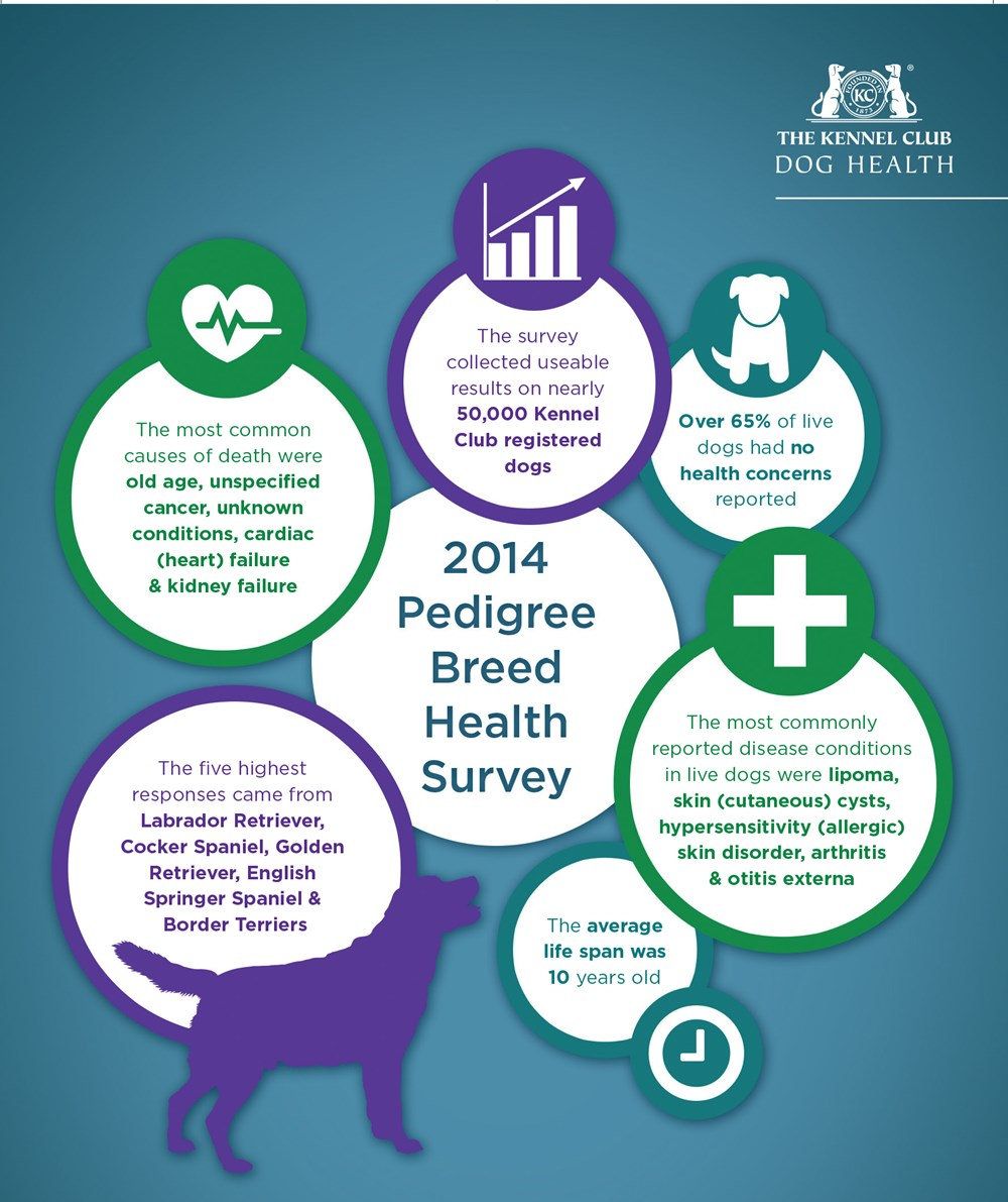 2014 Pedigree breed health survey infographic