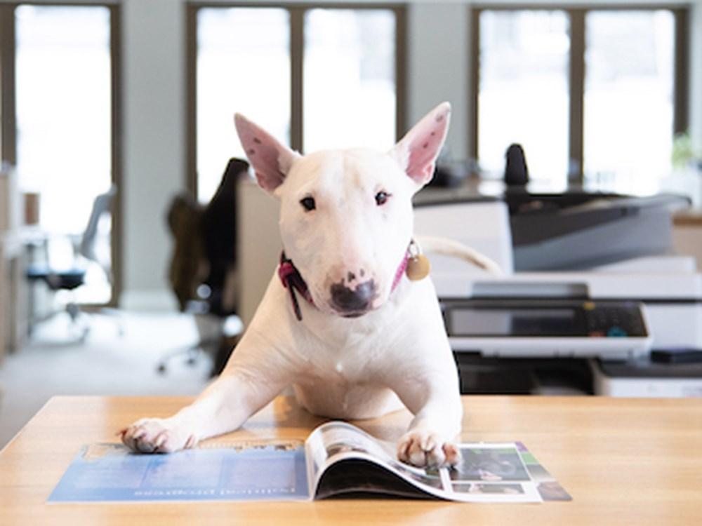 Dog sitting in an office reading a magazine