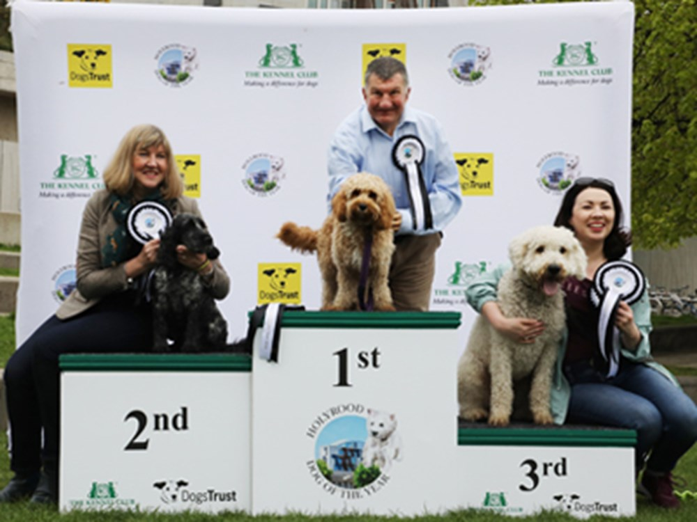3 dogs stood on podium