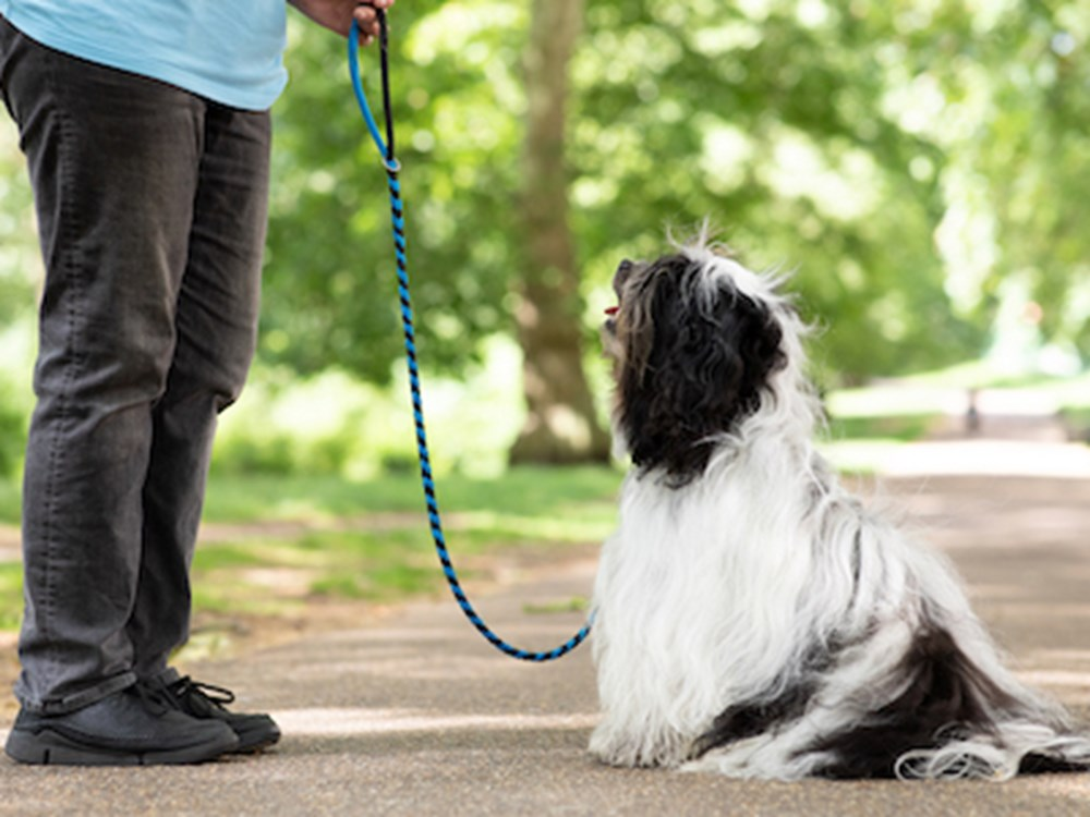 Dog outdoors on a leash, looking up at trainer