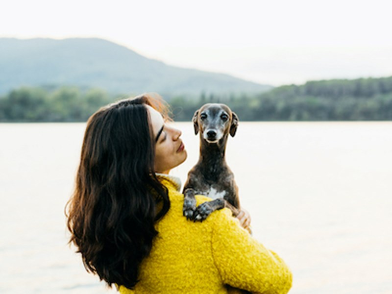 Italian Greyhound being held by a lake